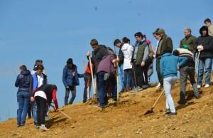 voluntari care planteaza arbori la caransebes